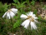 Strange forest flower